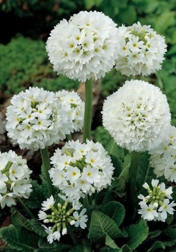 The 25  best White gardens ideas on Pinterest | White flowers ...