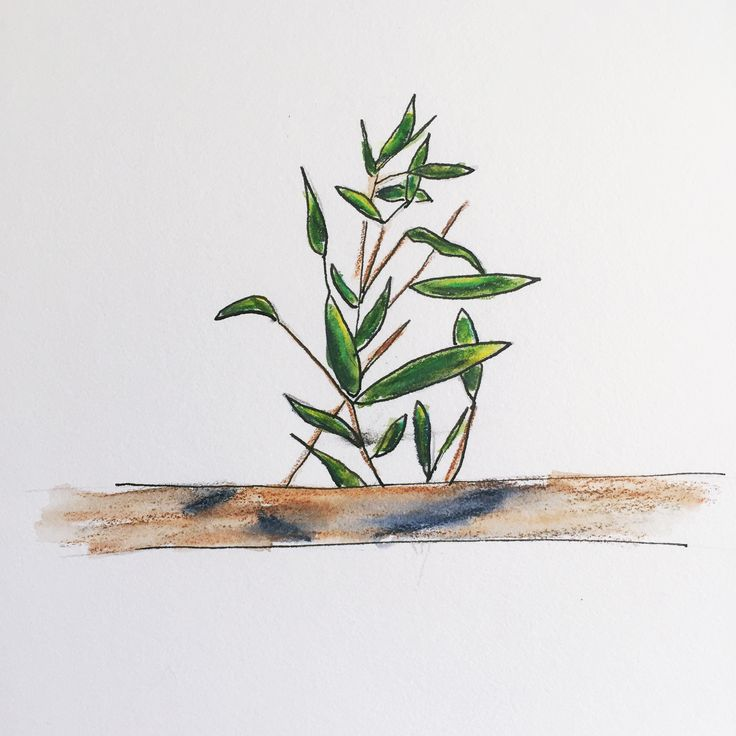 Plant doodle Watercolor pencils and ink