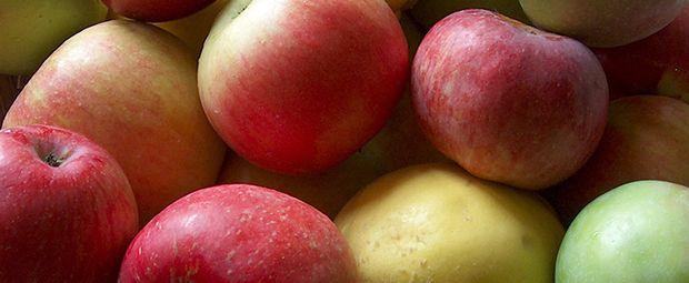 Acidulées, sucrées, croquantes, bien rouges ou délicatement vertes, les pommes sont véritablement les reines de l'assiette.