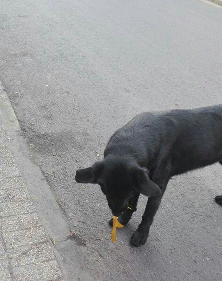 este perrito vagabundo jugaba con una hojita de un árbol