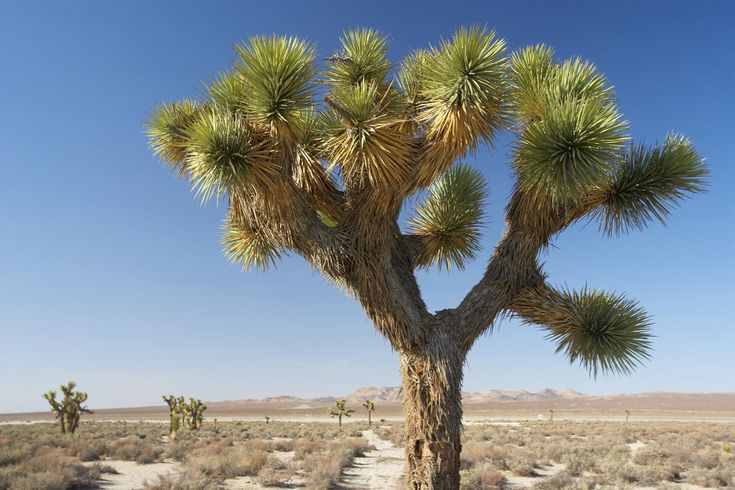 20 Facts About the Mojave Desert Ecosystem