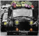 FREDDIE MERCURY. Así fue el funeral por Freddie Mercury