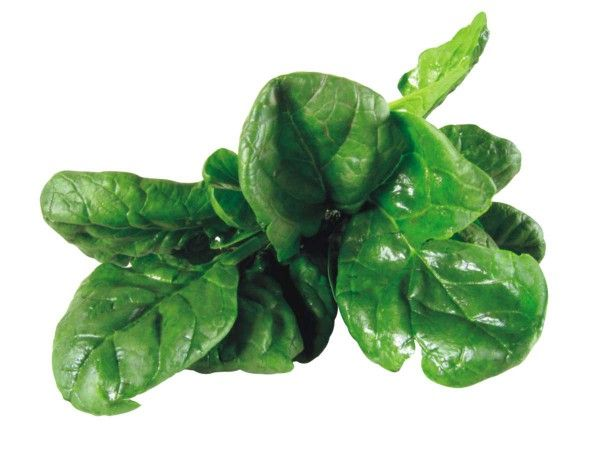 The Power of Green Vegetables - Why Popeye Eats Spinach? | Cool Healthy Recipes