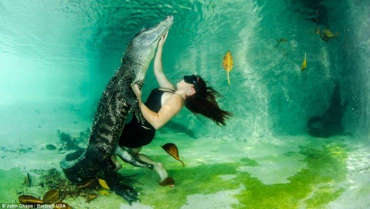 Отважные любители животных плавают со спасенными аллигаторами. (17 фото)