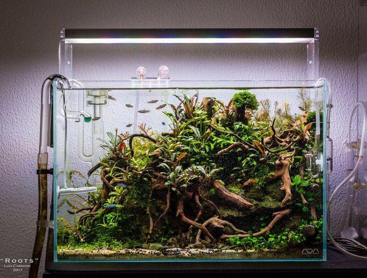 Aquascape #AquariumTips