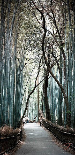 The bamboo forest, Arashiyama, Kyoto, Japan. Photo by FrancoisCad via Flickr