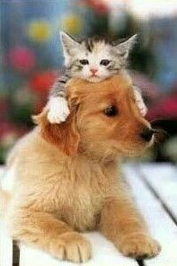 kitten & pup are pals