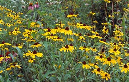 39 best Tennessee Native Plants images on Pinterest ...