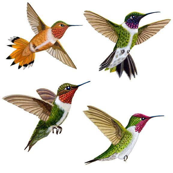 """Hummingbird wings move so fast that they are nothing but a blur; these winged beauties - though - are caught midflight and in living detail. Crisp - bright colors and those long needle-like beaks add great realism to a bird - nature - or sky-themed wall mural. Certainly a must-have for your home aviary! Care: Wipe with Damp Cloth. Large Birds (4): 5.75"""" x 5"""",8"""" x 8"""",6.5"""" x 7.5"""",9"""" x 9"""". Small Birds (9): 7 x 3.25"""" x 2.75"""", 2 x 3.5"""" x 2.5""""."""