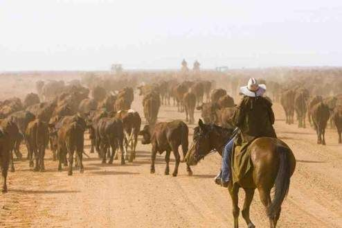 If you are really up the true outback experience then take the Oodnadatta track in South Australia
