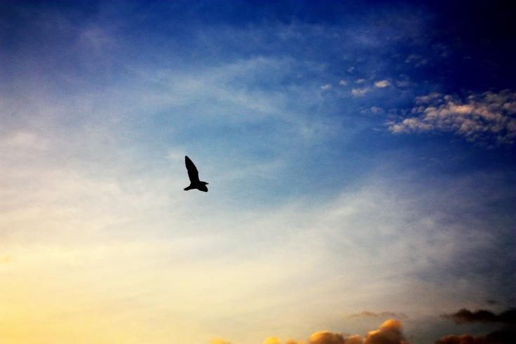 Bird on Sky : Bangpu Recreation Center : Samutprakarn : Thailand