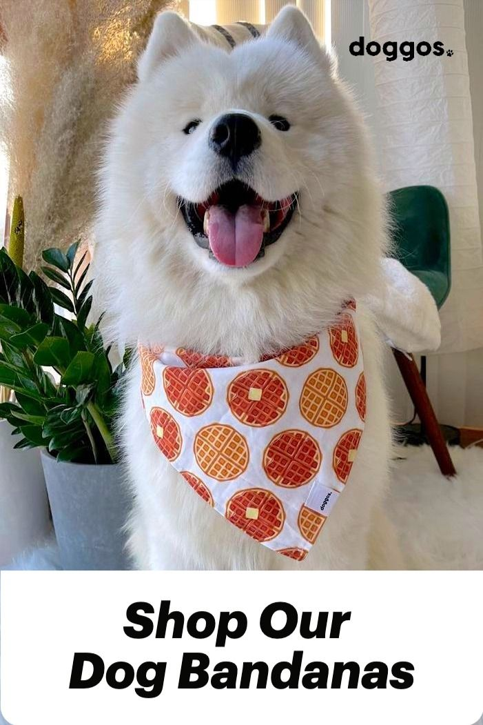 Shop our handmade dog bandanas. Adorable designs that will make your dog look cuter. Designed and packaged in Toronto. #dogs #shopfordogs #cutedogs #bandana #dogbandana #smalldogbandana #largedogbandana #sizeinclusive #dogaesthetic #aesthetic #stylishdog #dogmom #shoplocal #locallove