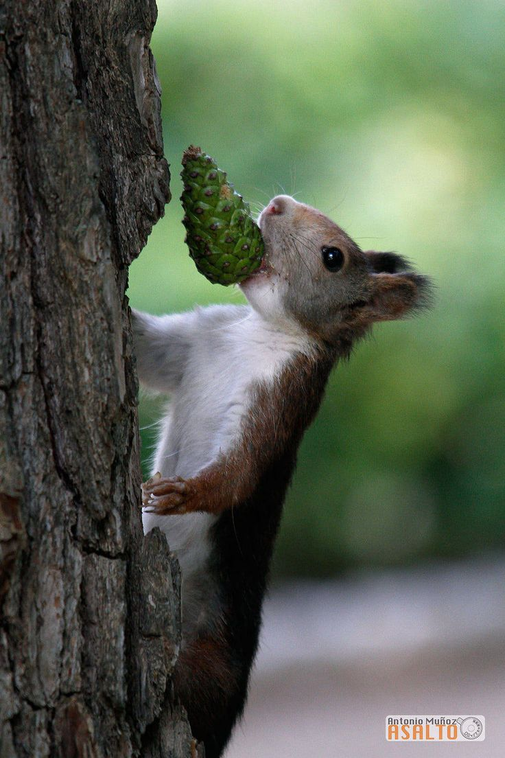 Meaning of white squirrel sighting - Squirrel Animal