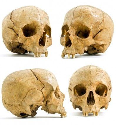 gallery for gt real skull angles skulls pinterest
