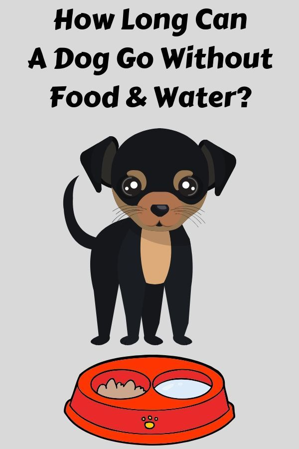 How Long Can A Dog Go Without Food And Water Dogs Pinterest
