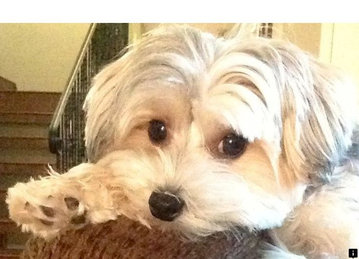 >>Want to know more about yorkie. Follow the link to find