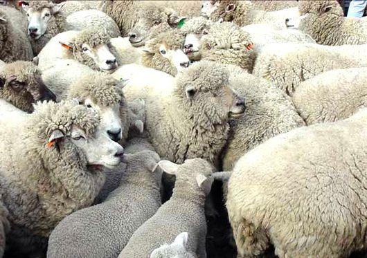 Después de 25 años se abrió la posibilidad exportar carne de la región a Medio Oriente. El titular de la planta de faena de Bariloche viaja a Dubai para ofrecer productos de la zona andina y la Línea Sur. El frigorífico Río Negro, que comenzó a opera