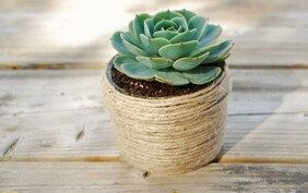 Single Potted Succulent in Twine wrapped Mason Jars Rustic Vintage Country Wedding Favors