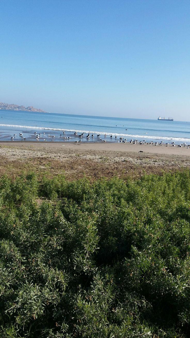 Playa Coquimbo/La Serena ...