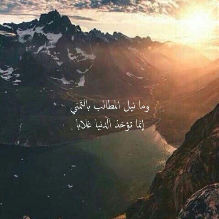Qoutes Poem شعر وما نيل المطالب بالتمني انما تؤخذ الدنيا غلابا 27 5 19 15 28 Study Quotes Islamic Calligraphy Painting Arabic Quotes