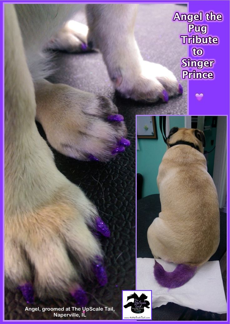 44 best creative color dog grooming images on pinterest grooming angels tribute to prince solutioingenieria Choice Image