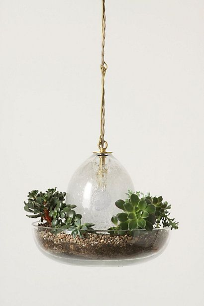 Plants!! NEED this light!Lights, Pendants Lamps, Dining Room, Glasses, Hanging Plants, Herbs, Terrariums Pendants, For Lamps, Hanging Terrariums