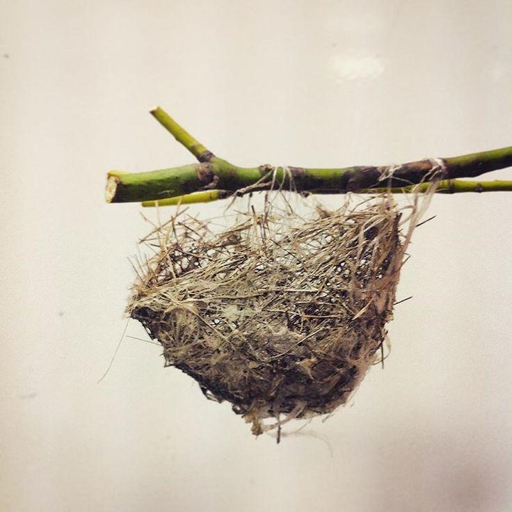 鳥の巣  #現代アート #建築 #住まい #スズランテープ #ブランコ型
