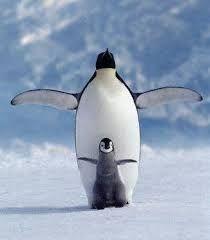 tučniak