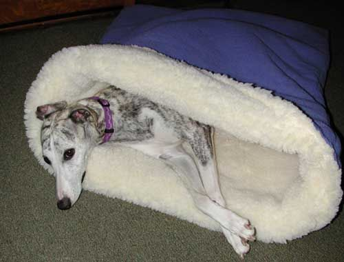 The Pita Bed - a Sleeping, Snuggling, Burrowing Bed for Dogs; Walle is so getting one of these.