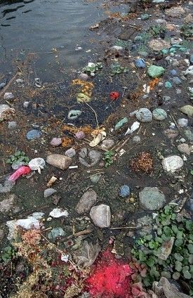 Serena - Ganges River Pollution, devastating water and River pollution caused by the consumer throw away culture which is then deposited in developing countries.