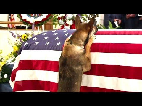 Max Official TRAILER (2015) Dog Drama Movie HD - YouTube