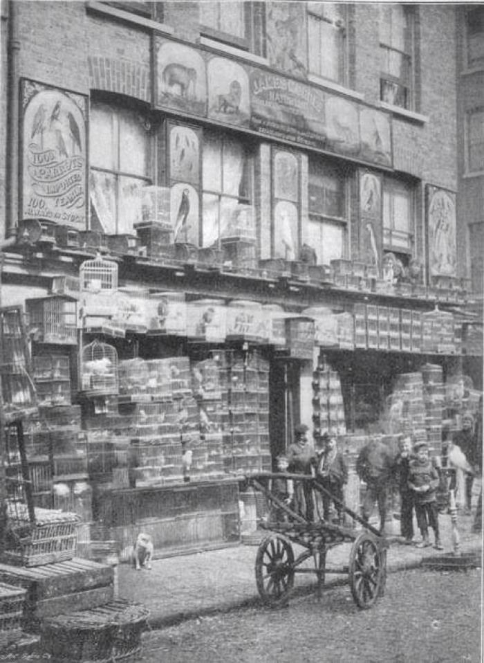 343 Best Images About 19th Century Victorian London On