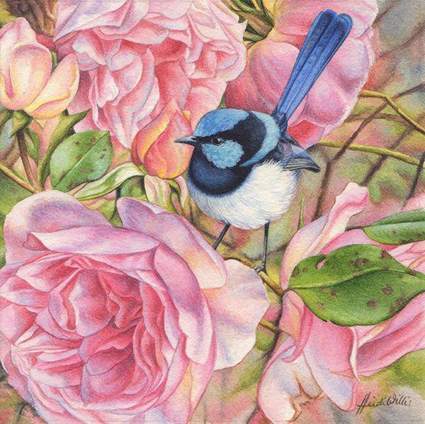 Heidi Willis - Blue Wren and Roses Miniature