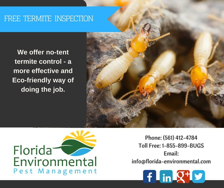 Free Termite Inspection We offer effective, eco