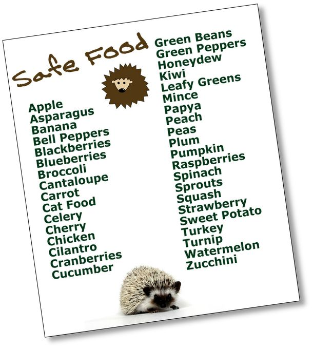 Best Food For Hedgehogs Pygmy