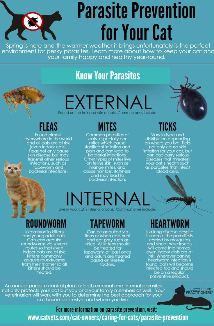 Controlling parasites in cats is an important part of their overall health. Cats should be on a monthly broad spectrum parasite preventative to help prevent and control parasites (even if they are an indoor cat). Many of the parasites that can affect your cat's health can affect humans as well, these are known as zoonotic parasites. A discussion with your veterinarian can determine the best parasite control plan for your cat's lifestyle.