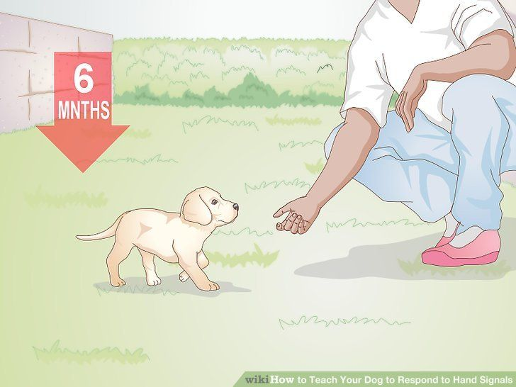 Teach Your Dog To Respond To Hand Signals Dog Obedience Dog