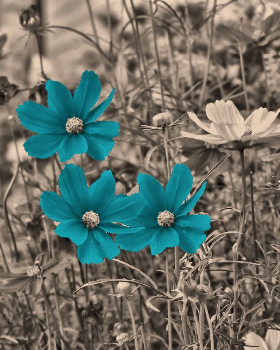 Brown Teal Blue Flowers Wall Art Home Decor by LittlePiePhotoArt