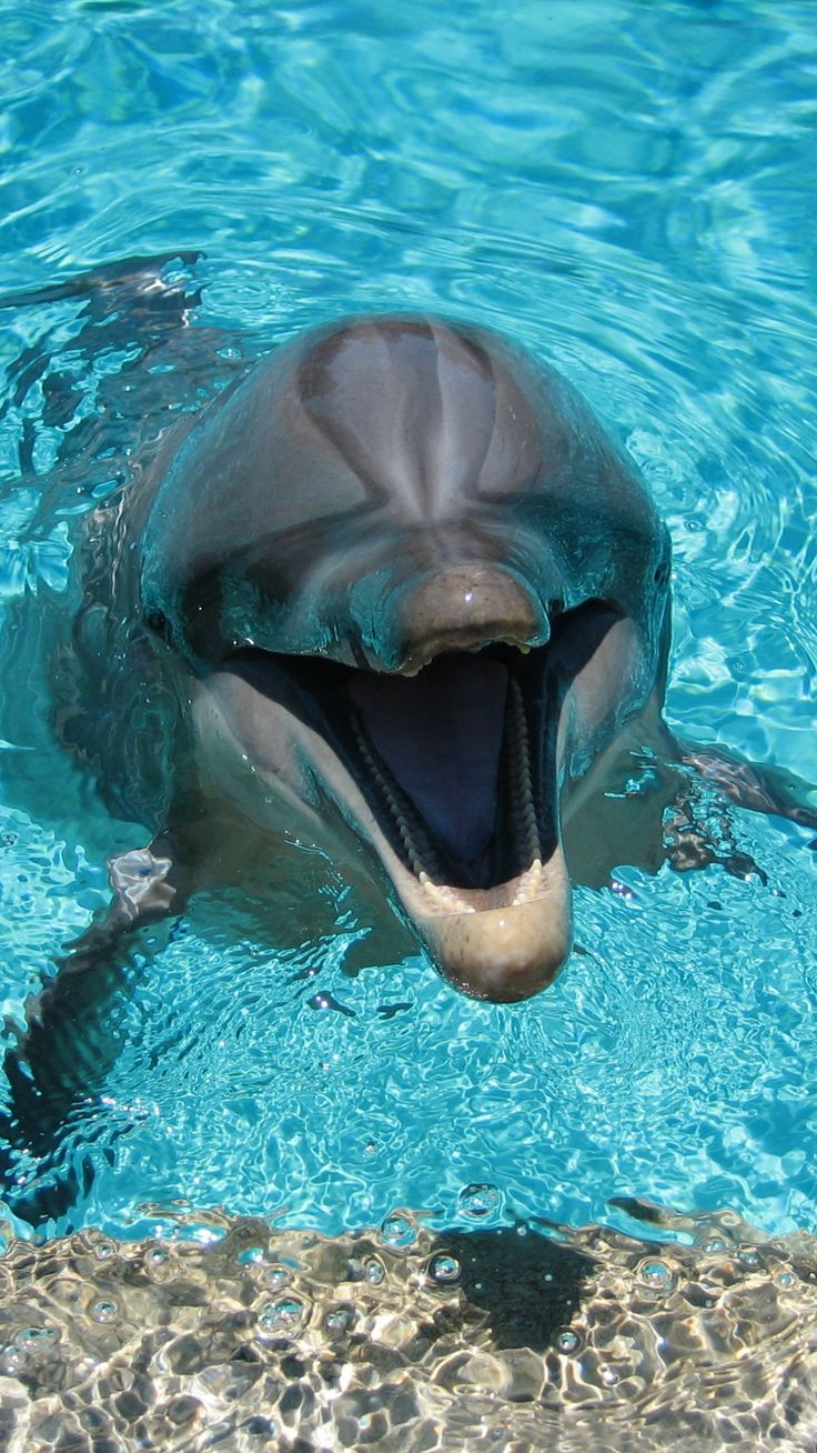 best 25 dolphins ideas on pinterest a dolphin what is a