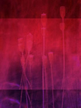 #print on steel Landscape #flora #poppies abstract red purple #nature @displate