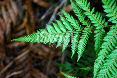 New Zealand Fern Background Royalty Free Stock Photo