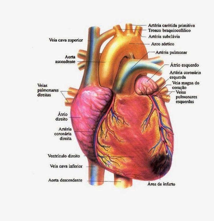 Estudo de caso Infarto Agudo do Miocárdio - IAM