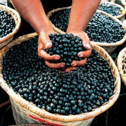 Acai fruit contains essential fatty acids (Omega-3 and Omega-6) plus oleic acid (Omega-9) which are good for lowering Low Density Lipoprotein (LDL) levels. Acai berries also contain high levels of calcium, vitamin e and phosporous, high concentrations of polyphenols making it a good antioxidant.