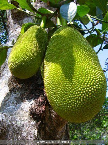 Top 10 jadalne rośliny egzotyczne (8 zdjęć)