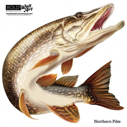 Northern Pike Wall Decal