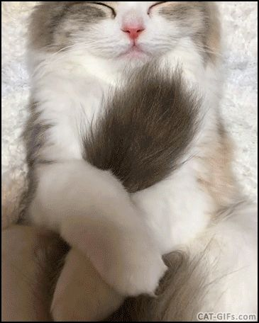 KITTEN GIF • Hey sleepy Kitty, It's your tail not your blankie not your big Cat mouse toy :)