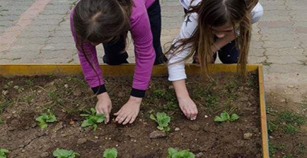 Η επανάσταση στη διατροφή ξεκινάει από το σχολείο: Λαχανόκηποι σε δημο...