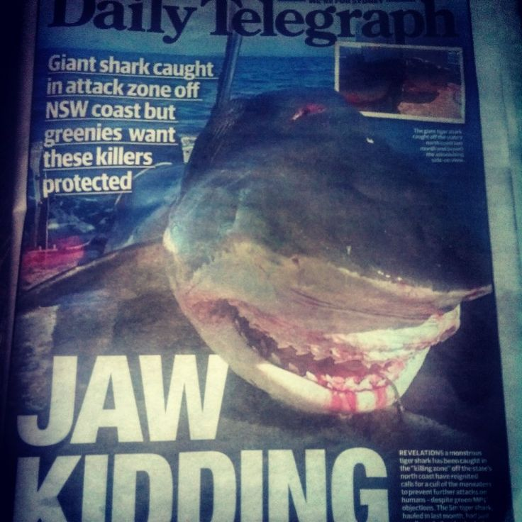 The newspaper of today #shark #tigershark #sea #caught #caughtshark #australia #nsw #australian #sydney #newsouthwales #wild #wildlife #wildnature #fish #omg #incredible #huge #awesome #great #picoftheday #nice #nature #attack #amazing #selfie #ocean #selfies #smile #dailytelegraph