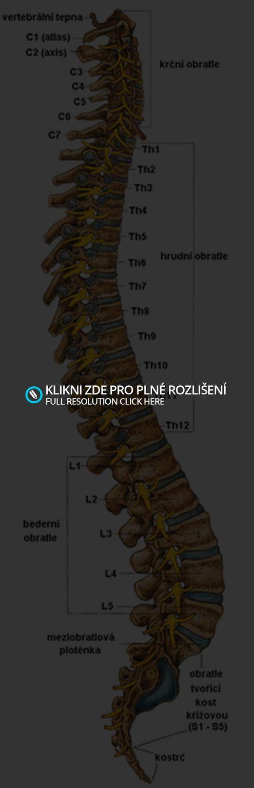 http://poutnicicasem.blog.cz/1302/psychosomatika-a-pater