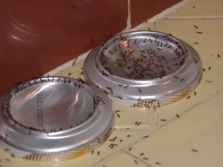 Sweet Sugary Boric Acid Ant Bait | BigOven